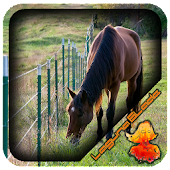 Wire Horse Fence Design