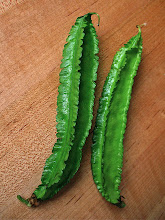 Photo: close-up of two winged beans