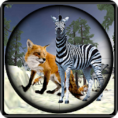 Hunt Fox And Zebra