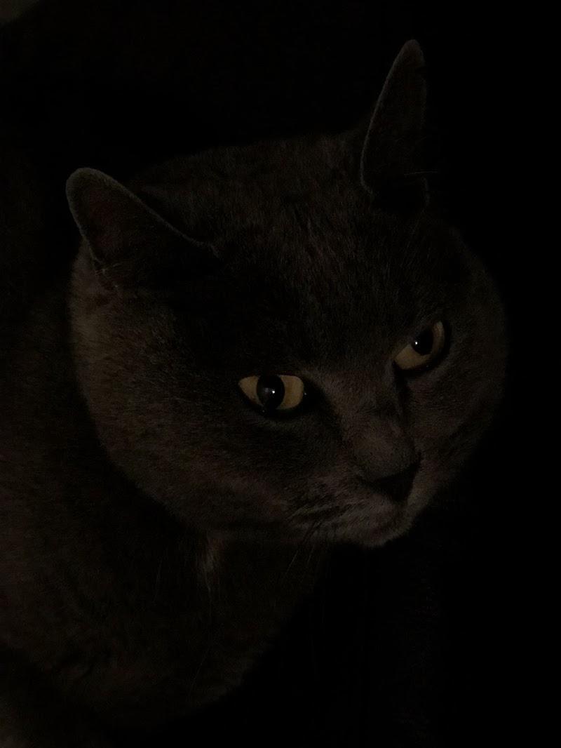 Luce felina di renatovenexian