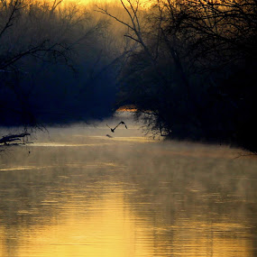 Fly United by Kevin Hill - Landscapes Waterscapes ( flying, foggy, nature, calmness, sunrise, geese, north carolina, river,  )