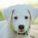 cute puppy wallpapers icon