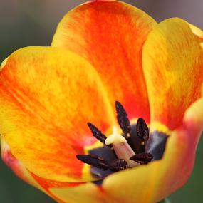 orange yellow flower by Logan Williams - Flowers Single Flower ( orange flower, flowers, single flower, yellow flower, flower )