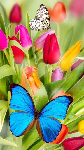 Butterflies water effect LWP