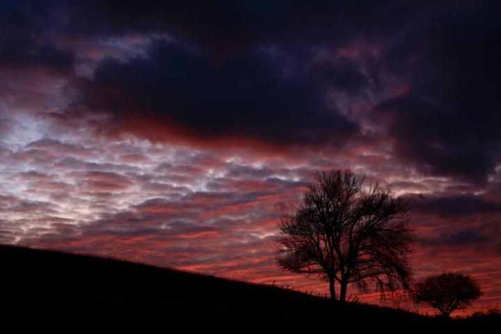 Alberi al tramonto di Dario Pace