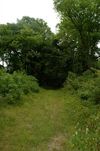 Photo: lots of green paths