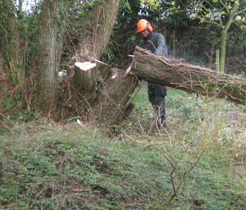 tree felling around worcestershire