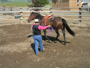 Photo: The horse should be able to carry the ropy on any part of her body without fear or any intimidation.