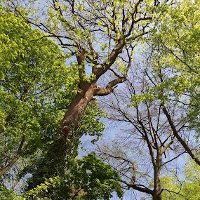 by Hilde Van Assche - Nature Up Close Trees & Bushes