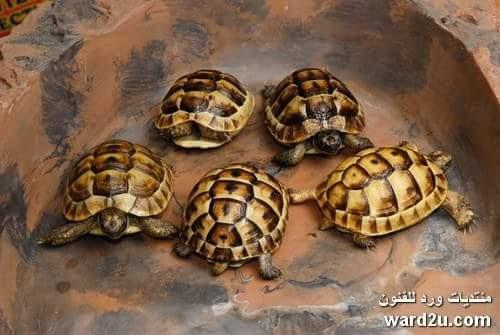 معلومات و صور عن حياة السلاحف و انواعها