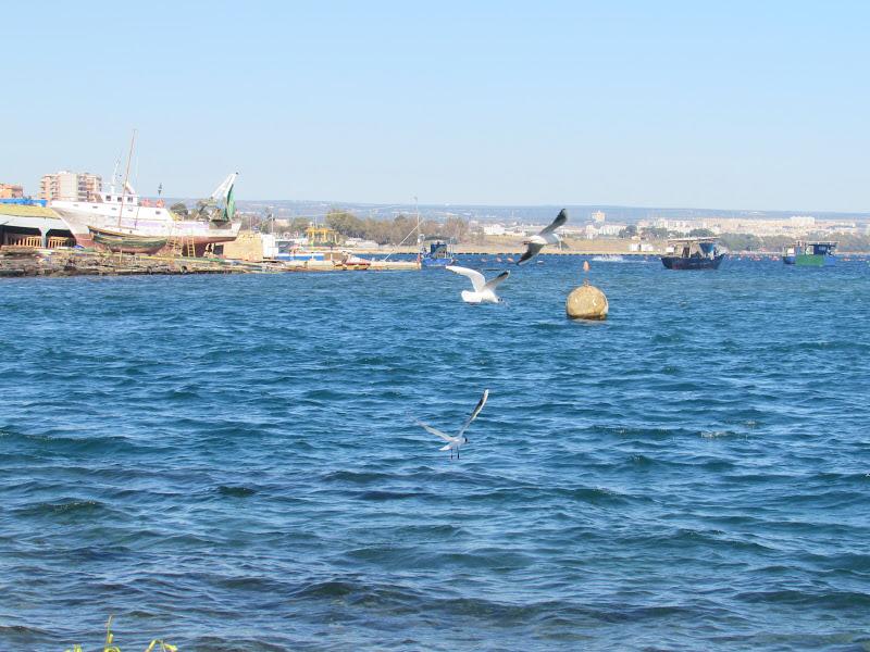 Taranto di mariateresadangella