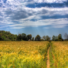 My country by Akhil Kalsh - Landscapes Prairies, Meadows & Fields