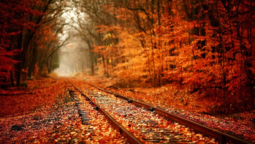 android Landscape.Autumn forest.HD LWP Screenshot 6