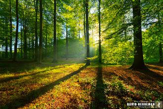 Photo: Forêt de Soignes, Belgique