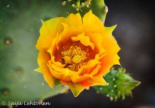 Photo: Saija Lehtonen Photography  http://saija-lehtonen.artistwebsites.com/