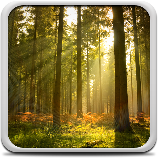 Sunny Forest Live Wallpaper Icon
