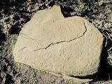 Photo: Pecked grinding stone along Ivie Creek