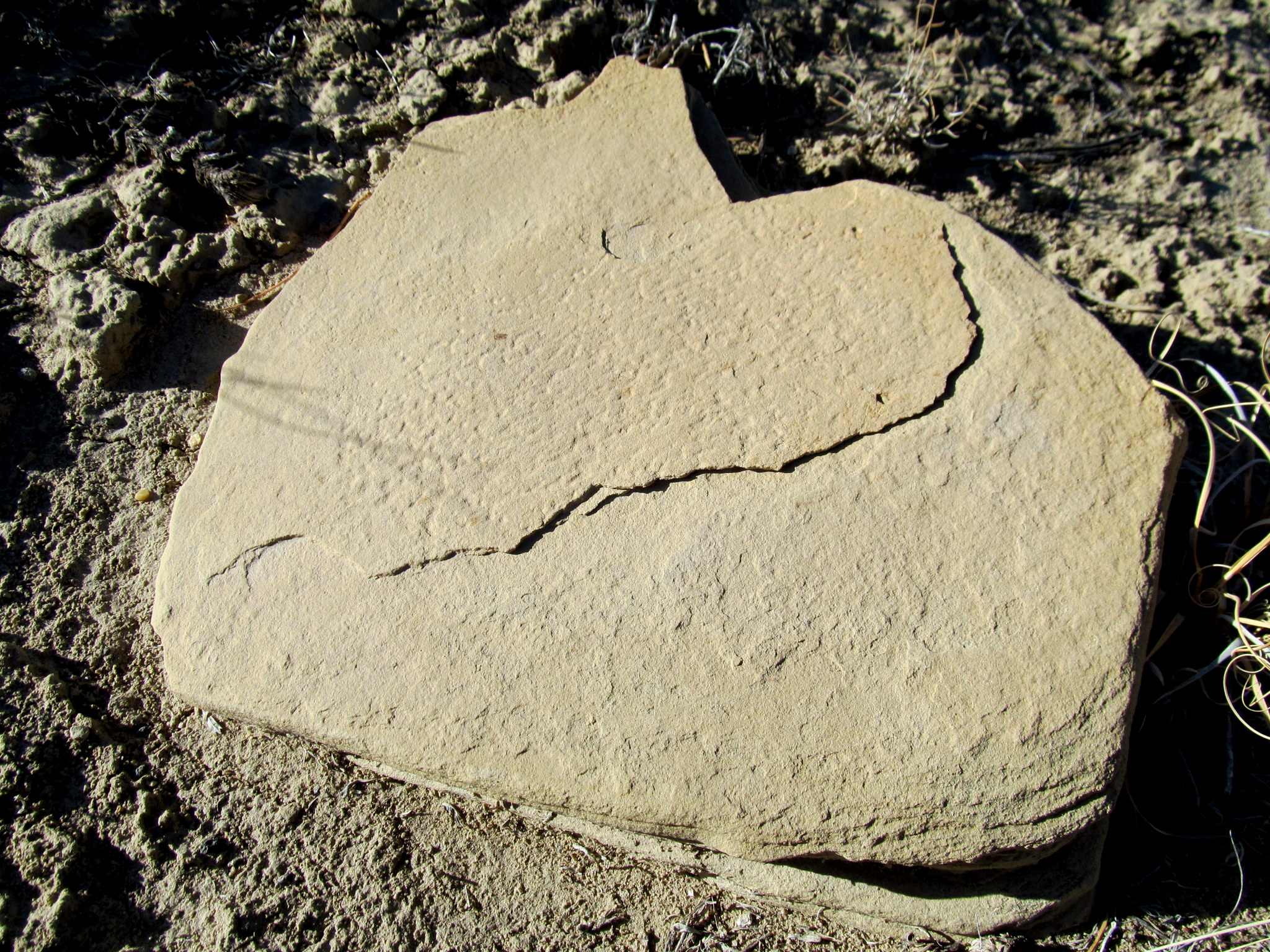 Photo: Pecked grinding stone along Ivie Creek