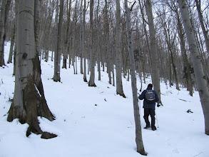 """Photo: 19.Podejście na Śnieżnicę. Gdzieś w tym rejonie jest """"Rezerwat Śnieżnica"""" (utworzony w 1968 dla ochrony buczyny i wychodni skalnych), ale trudno powiedzieć, czy szlak przebiega przez rezerwat, czy nieco go omija. Skałek nie widzieliśmy."""
