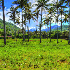 Coconut neighborhood by Muhammad Zein - Landscapes Mountains & Hills ( indonesia, lombok, view, landscape )