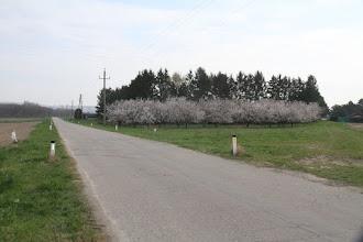 Photo: Začínajúca jar. Som v kraji pestovania marhúľ