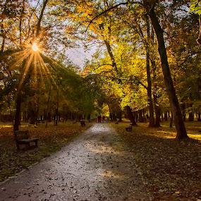 Beautiful day by Vanja Vidaković - City,  Street & Park  City Parks