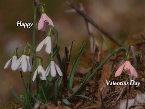 Photo: Happy Valentins Day  Der Sinn Deines Lebens ist das was Du daraus machst & bewusst zu erkennen  dass Du Licht & Liebe bist.