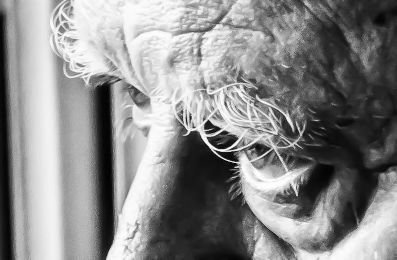 Vite negli occhi... di 2015 Marco Cristiano