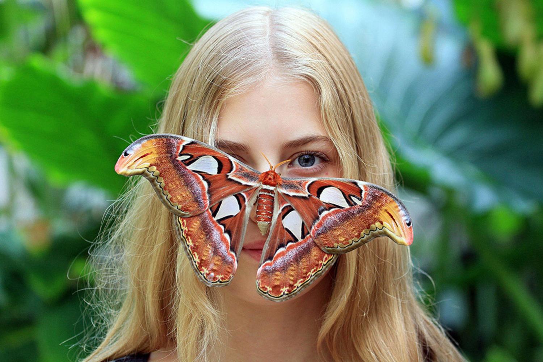 La búsqueda de la mariposa más grande África