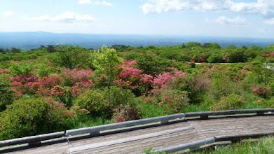 Photo: 八幡崎の最上部から