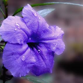 by Abdul Razak S - Nature Up Close Flowers - 2011-2013
