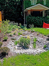 Photo: This garden (newly planted in this photo) is a series of rain gardens designed to handle a spring that popped up in the back yard AND water pumped out of the basement. Even during the Beaches Flood, while all the other properties on the street flooded, this one did not!