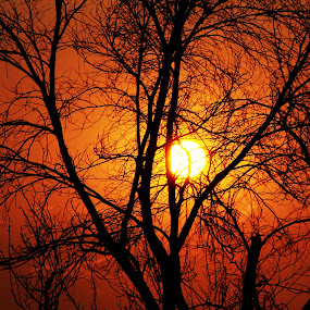 Goodbye Africa for the day  - Sun by Praveen Kumar - Landscapes Sunsets & Sunrises