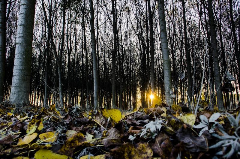 October falls di DeliriumMaro