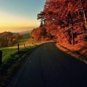 Autumn nature 1