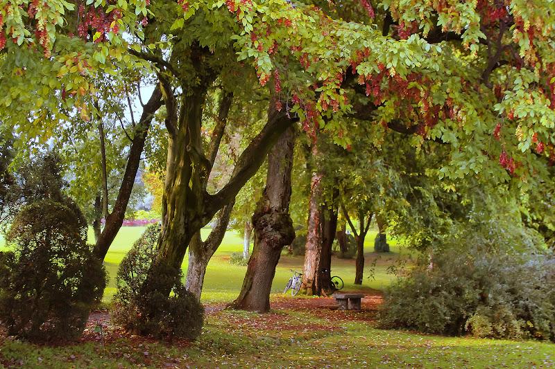 I colori dell' autunno di Cho