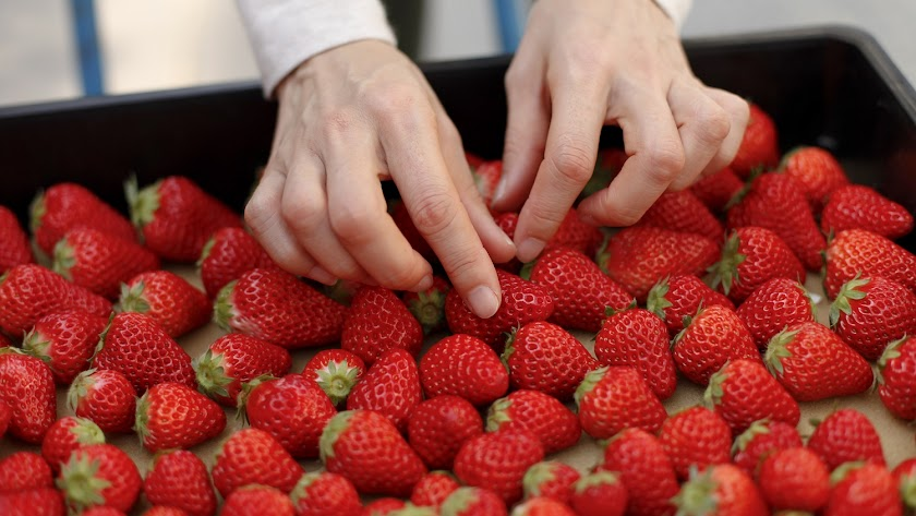 Manipulación en el envasado de una caja fresas.