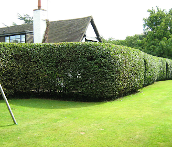 hedge cutting and tree surgery worcestershire