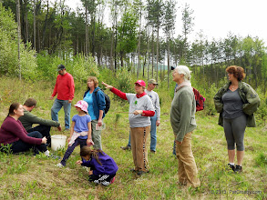 Photo: Transition from meadow to red pine plantation