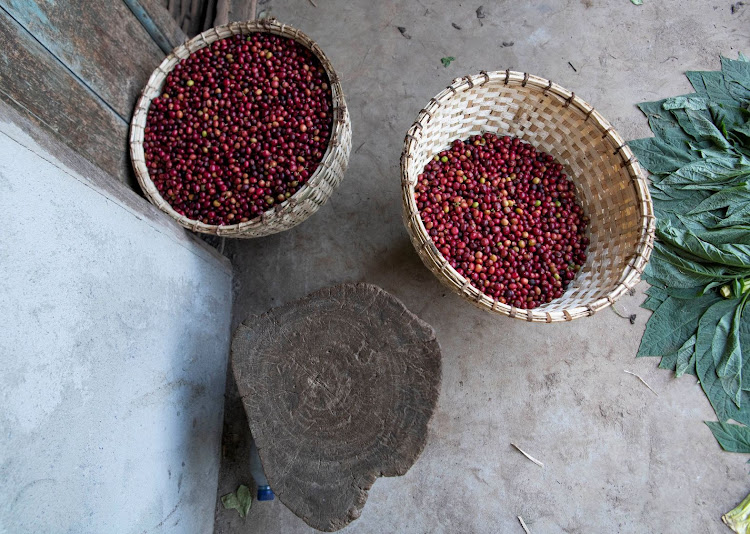 Freshly harvested red coffee cherries in baskets at a farm in Shebedino district of Sidama, Ethiopia. Picture taken: REUTERS/MAHEDER HAILESELASSIE/FILE PHOTO