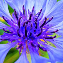 Photo: Inner Glow
