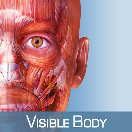 Muscle Premium - 3D Guide