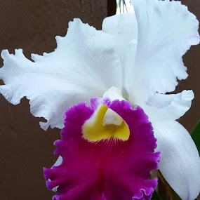 Orchid by Terri Durden - Flowers Single Flower ( orchid, beautiful, perfect, garden, flower )