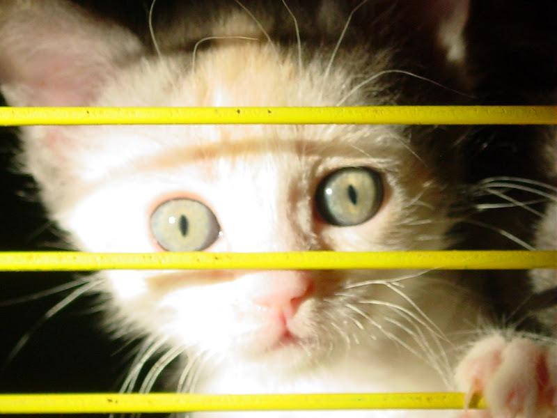 Eyes di AlexSandra