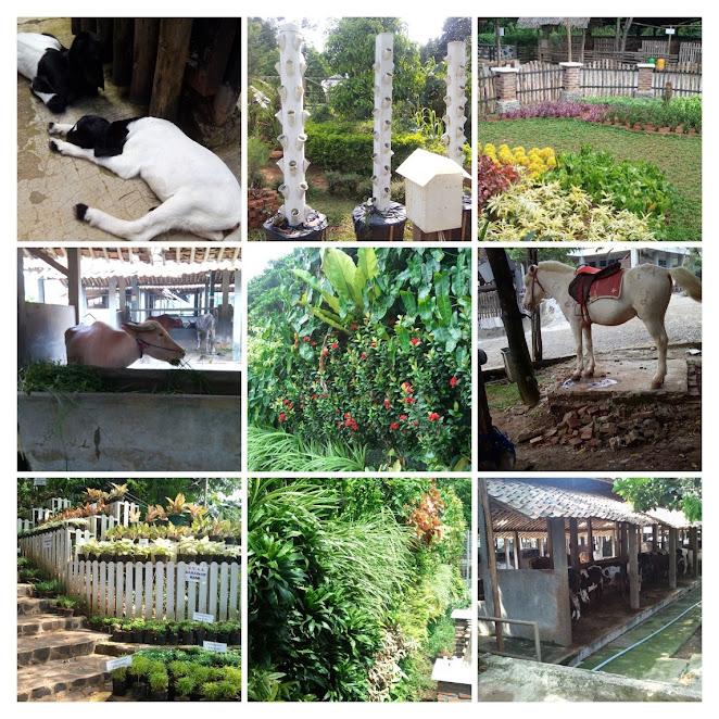 DKandang Amazing Farm tahun 2014-2016