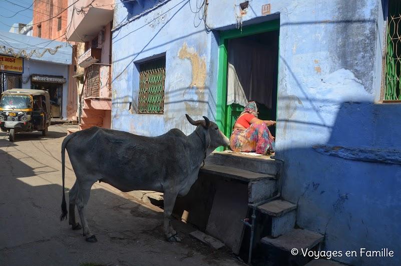 Vache Bundi