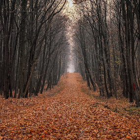 November by Stefan Ungureanu - Landscapes Forests ( november, autumn, pwc79, trees, circle, leaves,  )