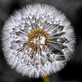 by Mat Tmil - Flowers Single Flower