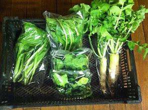 Photo: 野菜セットの中サイズです