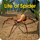 Life of Spider Apk